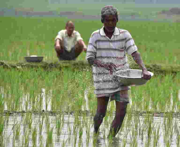 中心可以实施普遍的基本收入来解决农民的困境
