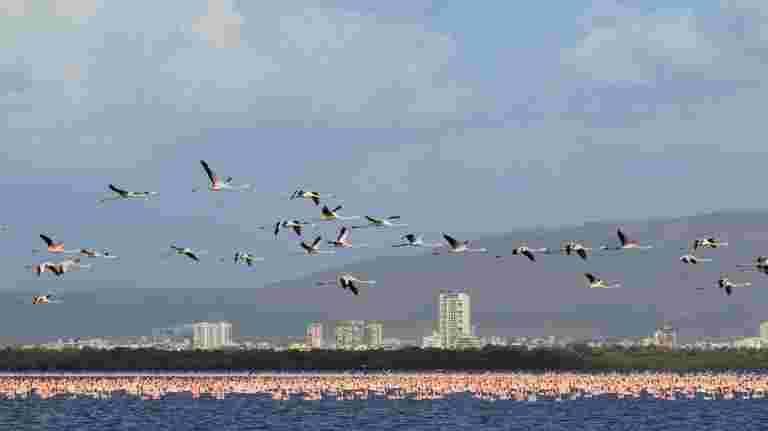 湿地浪费垃圾箱,孟买的多元化栖息地屋数数百个鸟类
